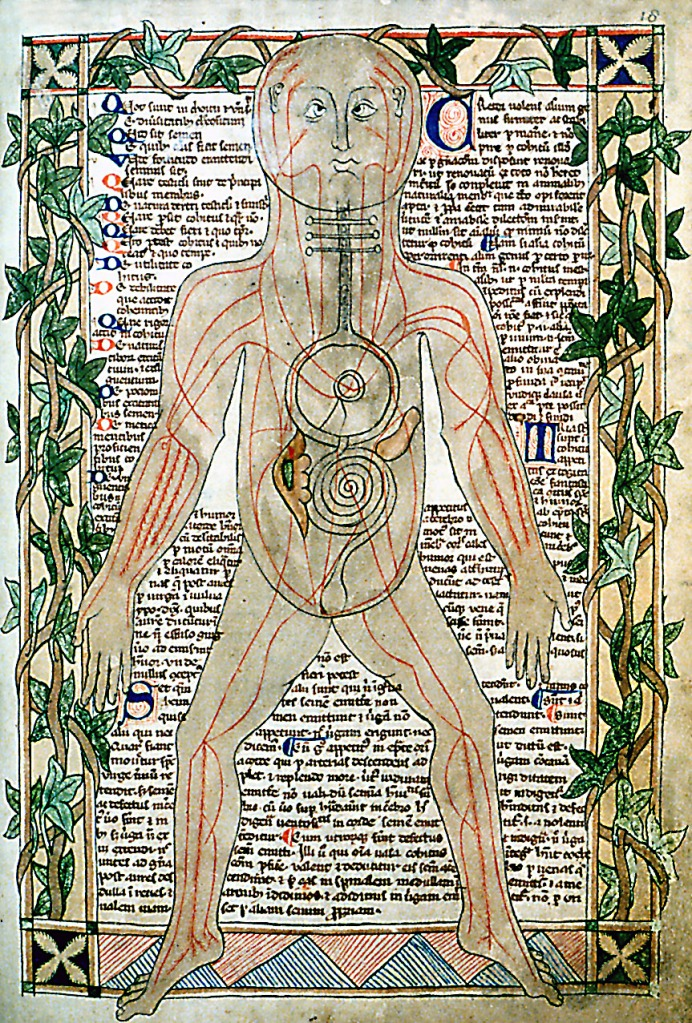 13th_century_anatomical_illustration_-_sharp
