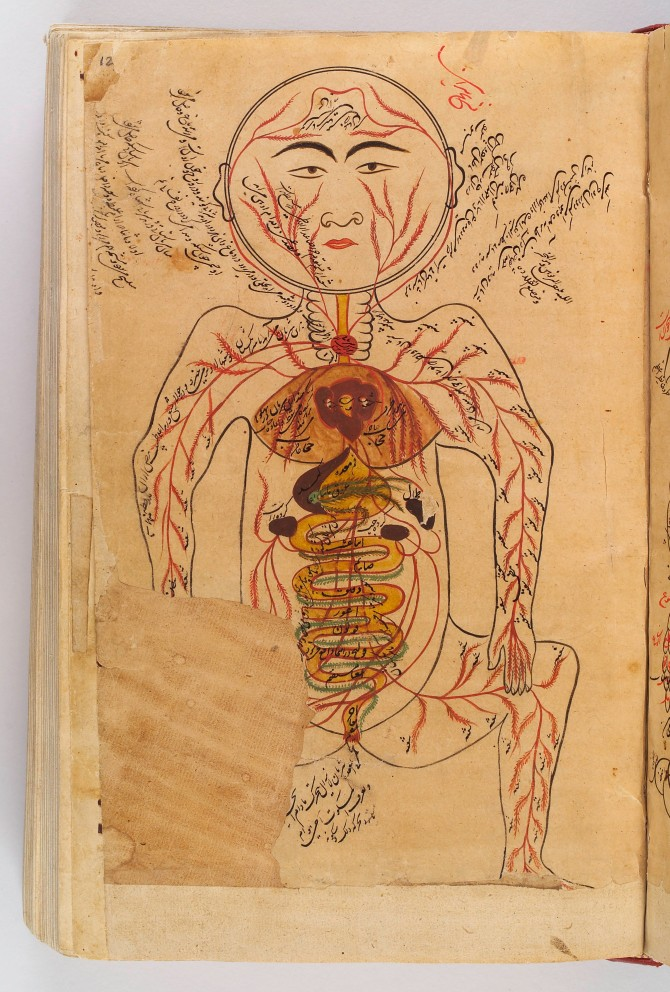 L0029162 Drawing of viscera etc., Avicenna, Canon of Medicine
